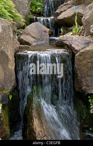 Waterfall in Rock garden. RHS Wisley, Surrey, England. Note blue Mecanopsis flower. - Stock Photo