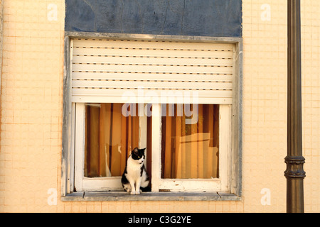 A black and white cat sits on the windowsill of a house in Silves, Algarve, Portugal. - Stock Photo