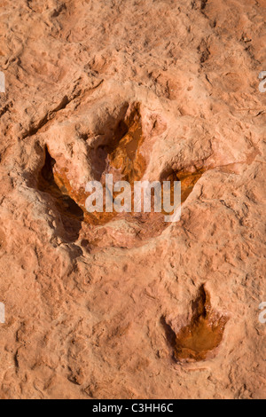 Pair of early Jurassic Therapod tracks, Dilophosaurus wetherilli, at Moenkopi Dinosaur Tracks near Tuba City, Arizona, - Stock Photo