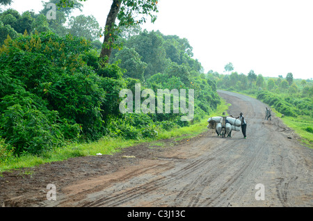 Virunga National Park, eastern Democratic Republic of Congo, Central Africa in the great Rift Valley. - Stock Photo
