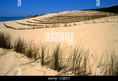 Dune at  Valdevaqueros beach . Tarifa. Costa de la Luz .Cadiz province . Andalusia.Spain. - Stock Photo