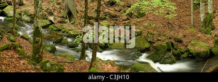 Bach im Nationalpark Bayerischer Wald, Creek in Bavarian forest national park, Deutschland, Germany - Stock Photo