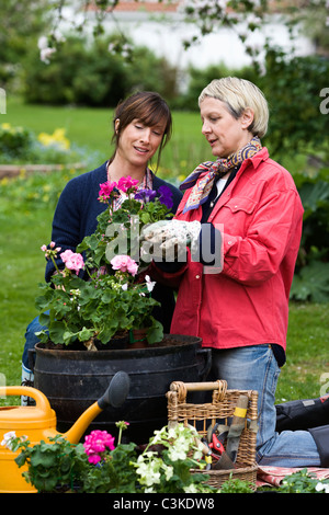 Two women setting flowers in pots, Sweden. - Stock Photo