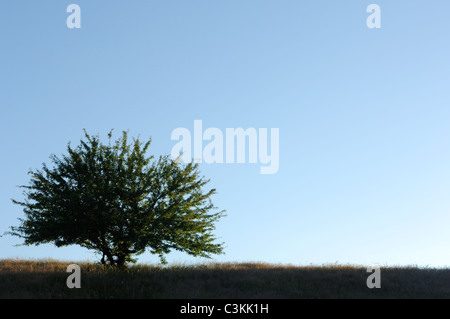 Tree on meadow against blue sky - Stock Photo
