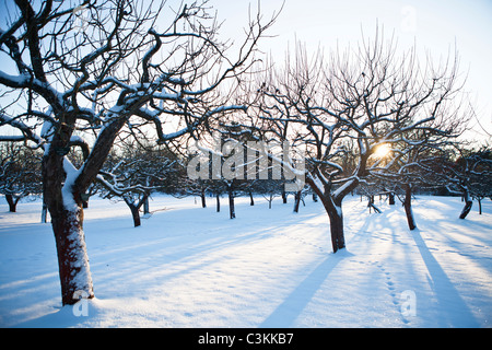 Snow covered trees in winter - Stock Photo