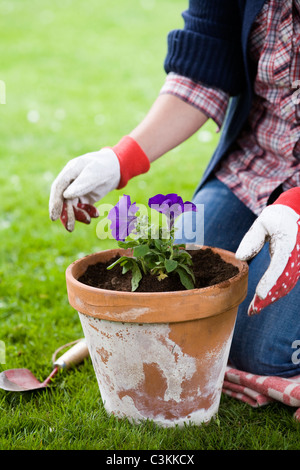 The hands of a woman setting a flower in a pot. - Stock Photo
