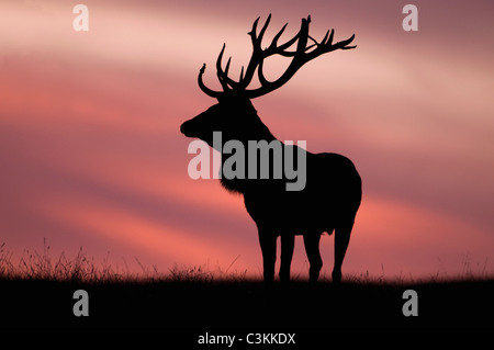 Silhouette of red deer against sky - Stock Photo