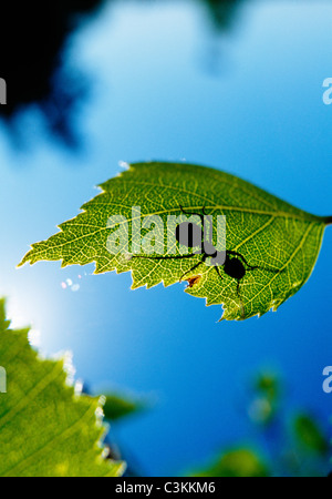Wood ant on leaf with sunlight falling on it