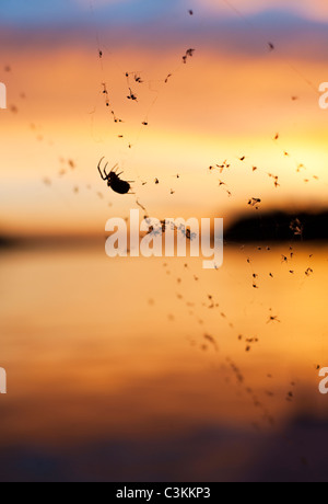 Silhouette of spider on web against sunset - Stock Photo