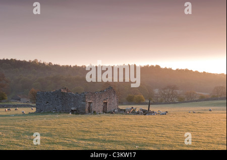 Crumbling rustic old barn ruin in sheep field in early morning sunlight at sunrise (scenic rural landscape) - Wharfedale, Yorkshire Dales, England UK.