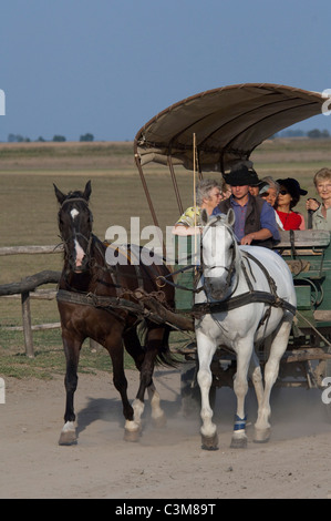 Hungary Kalocsa Traditional Hungarian Horse Cowboy At