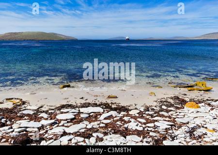 South Atlantic, West Falkland, Falkland Islands, Falklands, New Island, View of cruise ship in sea - Stock Photo