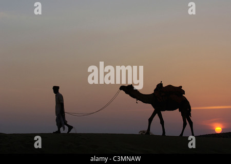 Dromedary, One-humped Camel (Camelus dromedarius) with Pastoralist in the Thar desert silhouetted against the setting - Stock Photo