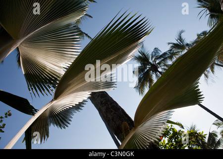 Indonesia, Island Bali, near Tejakula village. Leaves in garden. - Stock Photo