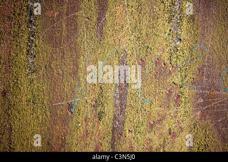 Photography shows a rusty metall background and moss.