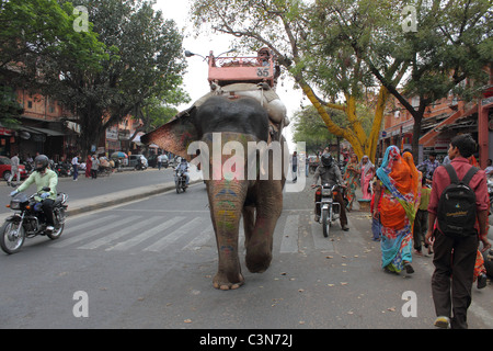 elephant walking down the road - Stock Photo