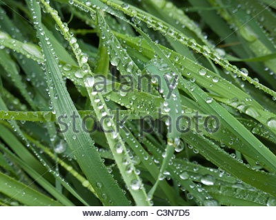 water droplets on blades of grass after rain - Stock Photo