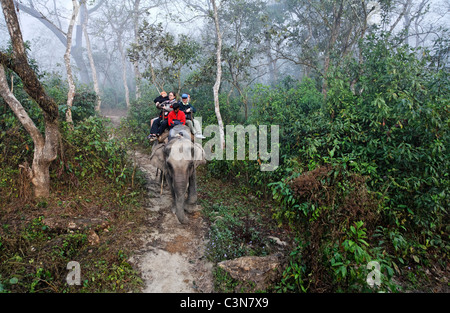 Nepal - Chitwan National Park - safari on elephant back - Stock Photo