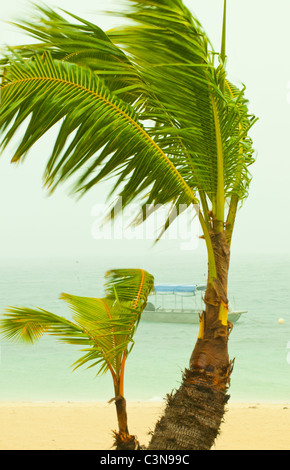 Wind blowing Palm trees in a tropical storm on the pacific ocean, Mamanuca Islands,  fiji - Stock Photo