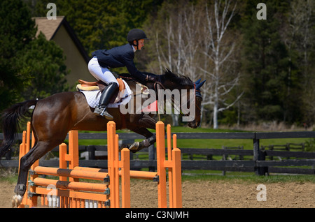 Thoroughbred horse rider jumping over an oxer fence at an outdoor equestrian show competition Ontario - Stock Photo