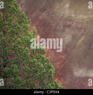 Red Rock and Trees, Painted Hills, John Day Fossil Beds National Monument, Oregon - Stock Photo