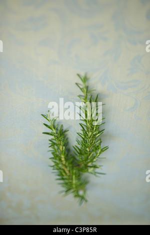 Rosemary, (Rosmarinus officinalis), elevated view - Stock Photo