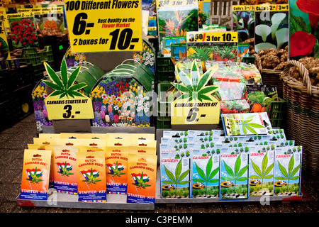 Marijuana seeds, narcotics, substance, weed and drugs for sale in flower shop, Amsterdam, Holland, The Netherlands, - Stock Photo