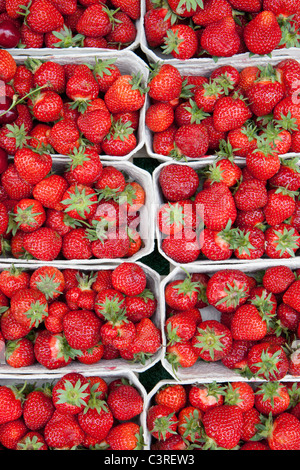 Germany, Munich, Strawberries in boxes at market - Stock Photo