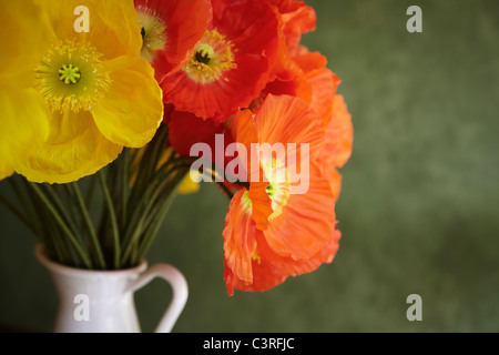 Hamburg, Close up of red and yellow poppy in vase - Stock Photo