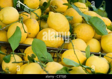 freshly picked organic lemons on market food stall, turin, italy - Stock Photo