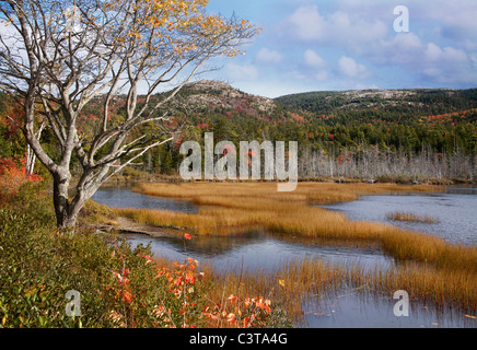 Seal Cove Pond In The Colors Of Autumn, Mount Desert Island, Acadia National Park, Maine, USA - Stock Photo