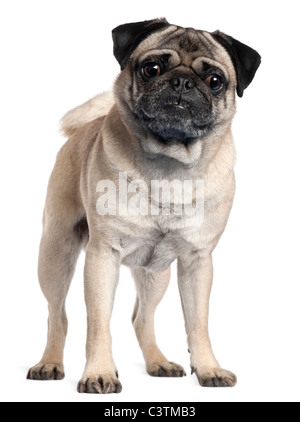 Pug, 2 and a half years old, standing in front of white background - Stock Photo