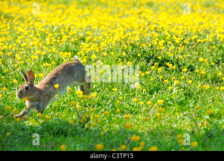 Rabbit Jumping in Flower Field - Stock Photo