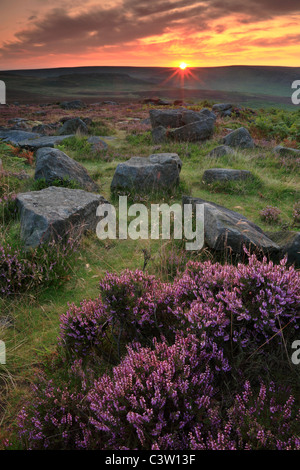 Sun rises over bright purple heather in bloom at Owler Tor near Hathersage in the Peak District of England - Stock Photo