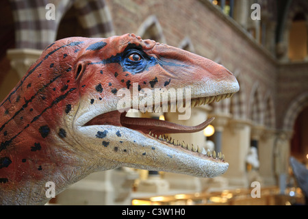 Utahraptor dinosaur model at the Oxford University Natural History Museum, Oxford, England - Stock Photo