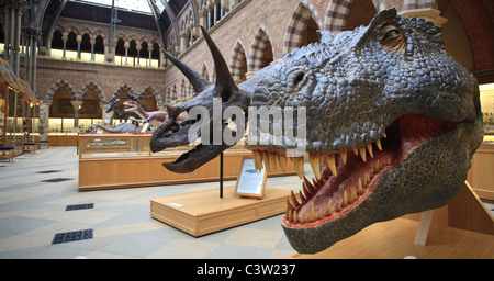 T. Rex and Triceratops dinosaur model head at the Oxford University Natural History Museum, Oxford, England - Stock Photo