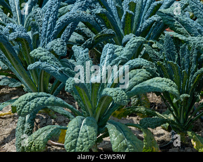 The Vegetable Garden at the Chateau du Rivau - Stock Photo