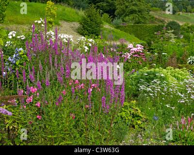 Colourful summer border at La Plessis Sasnieres - Stock Photo