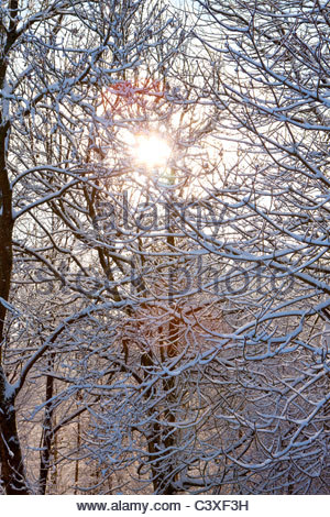 Sun shining through snow covered tree branches - Stock Photo