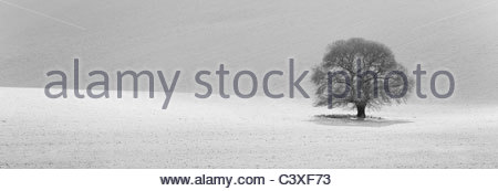 Isolated tree in snow covered landscape - Stock Photo