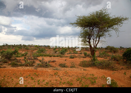 African landscape and nature near Turmi, Ethiopia, Africa - Stock Photo