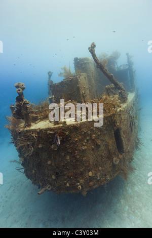 Prince Albert wreck in Roatan, Honduras. - Stock Photo