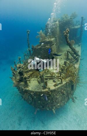 Scuba Diver inspecting the Prince Albert wreck in Roatan, Honduras. - Stock Photo