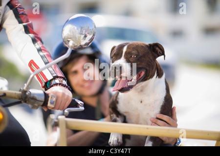 Dog on a motorbike - Stock Photo