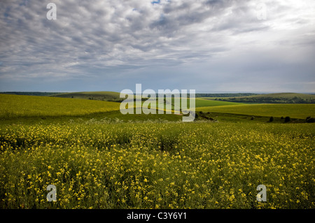 Harrow Hill from the South Downs Way, West Sussex, UK - Stock Photo
