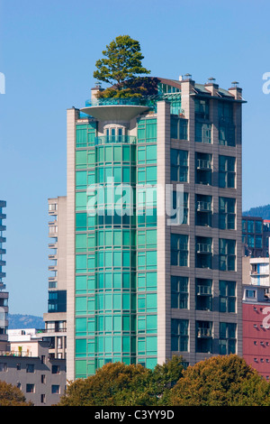 Green Living - a large pine tree grows atop this modern tower in Vancouvers trendy west end. - Stock Photo