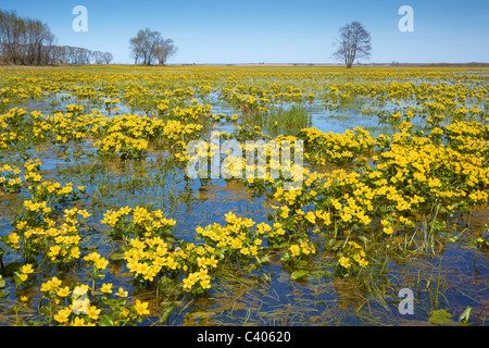 Poland spring landscape - Biebrza National Park, Podlasie region, Poland - Stock Photo