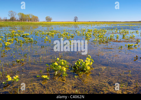 Biebrzanski National Park, Podlasie region, Poland - Stock Photo
