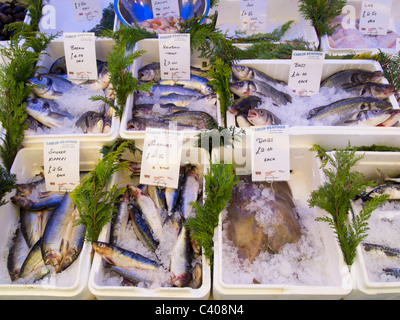 Fresh fish and other seafood for sale on a market stall in Christchurch, Dorset, England. - Stock Photo