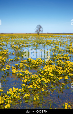 Biebrza National Park, Podlasie region, Poland - Stock Photo